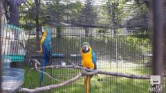 adorable male and female macaw for small fee