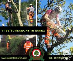 Tree Surgeons in Essex  Valiant Arborist Ltd.