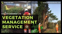 Vegetation Management Services in Rochford and Essex.