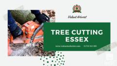 Best Tree Cutting Service In Essex  Valiant Arborist