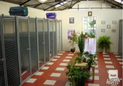 Sunny Meadows Cattery