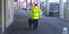 24H Mobile Dog Patrols London in Ingatestone