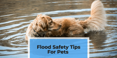 Flood Safety Tips For Pets