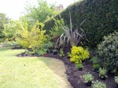 Hedging Plants Essex