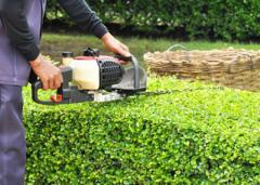 Hedge Cutting Essex