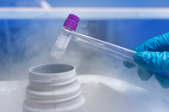 Do you know about Frozen Embryo Transfer Treatment