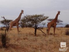 Book South Africa Safari Tour at the Best Price