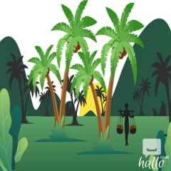 Buy Organic Coconut Palm Sugar in the UK