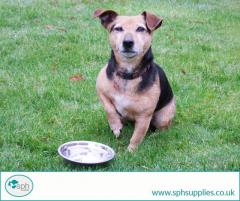 Buy the Best Food Bowls for Dogs Online  SPH Supplies