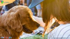 Insure Your Pets With Compare Market Insurance  Pet In