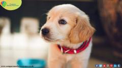 Compare The Market Pet Insurance For Getting Cheap