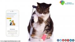Compare Pet Insurance Online And Get Quotes In Minutes