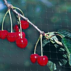 Buy Fruit Netting: Protect Your Plants Today