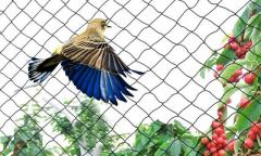 Get a 5% Discount on Bird Netting for Garden in the UK