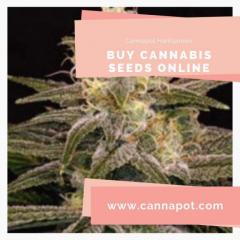 Buy cannabis seeds online from Cannapot and get assured