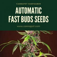 Automatic Fast Buds Seeds From Online