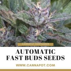 Automatic Fast Buds Seeds Quick to Harvest