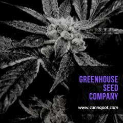 Buy Greenhouse Seed Company Cannabis Seeds Online