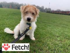 For Pet Sitting Services Contact HeiDors Fetch