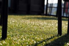 Artificial Grass in Hertfordshire - Free Delivery.