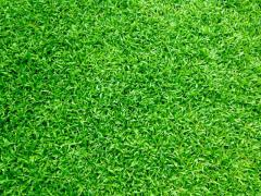 Make Your Garden More Beautiful With Artificial Grass.