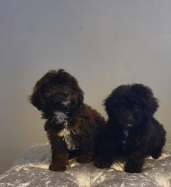 Outstanding puppies for adoption