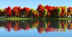 Canvas Print Trees And Reflection