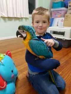 Blue-Gold Macaw Parrots