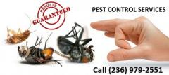Take Essential Steps for pest free home