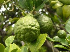 Bergamot Perfumery Base Oil Wholesale - Bmv Frag
