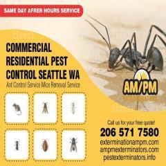Little black sugar ants Pest control | House ants exter