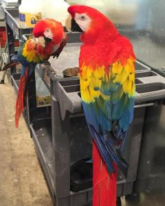 Macaw For Sale.whatsapp Me At 447440524997