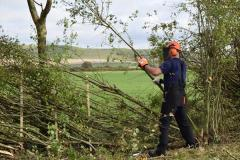 Tree Maintenance Services From Sg Tree Services
