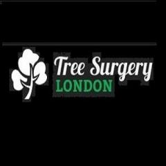 Tree Surgery In Romford By Certified Arborists