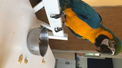 Accessories And Cage Blue And Gold Macaw