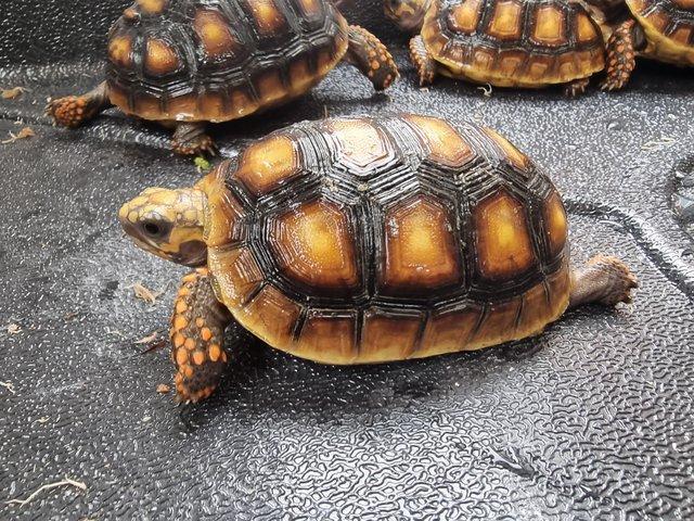Turtles, Iguanas, Tortoises and Chameleons 4 Image