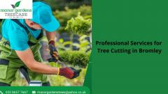 Professional Services For Tree Cutting In Bromle
