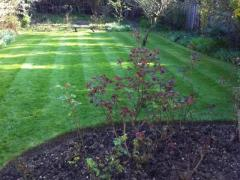 Garden Maintenance North London
