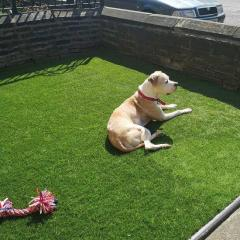 Lush Green Your Lawn With 40Mm Artificial Grass