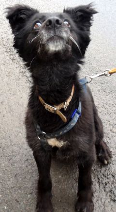 Skye is looking for a new loving home