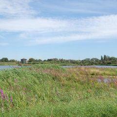 Grazing marsh walk