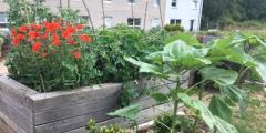 Urban Roots 10 Year Garden Party