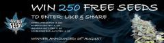250 Free Seeds - Sensible Seeds