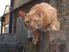 Cat behaviourist