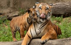 Enjoy North India Wildlife Tour Packages Rajasthan