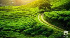 Book Sikkim Darjeeling Tour Packages To Budget P