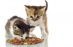 Cats Food - High energetic Raw cat Food in Manchester