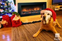 CHRISTMAS with sea views Norfolk dog friendly cottage.