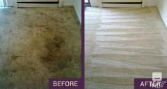 Carpet Cleaners Sutton - Efficient Stain Removal