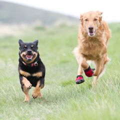 Best store for buying best dog accessories